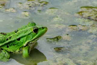 20100809_grenouille_thumb